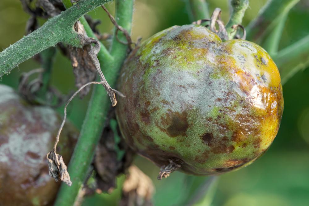4-common-plant-infestations-3dponics-2