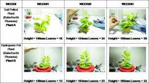 Advantages of Hydroponics over Soil Gardening